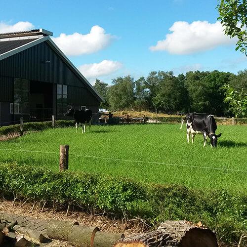 Erve Lansink melkveehouderij boerderij